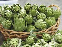 Green Globe Artichoke Ukraine Heirloom Vegetable Seeds