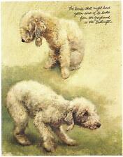 Bedlington Terrier - Vintage Dog Art Print - Poortvliet