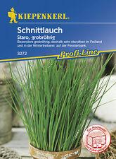 Kiepenkerl Saatgut Schnittlauch Staro, grobröhrig
