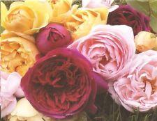 Business Greeting Cards Customer Appreciation 2 Up Sheet Vibrant Roses