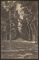 "Egypt. Ismaïlia ""City of Beauty & Enchantment"" The Forest. 2 - Vintage Postcard"