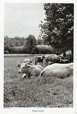 23 PAYSAGE BUCOLIQUE TROUPEAU DE VACHES IMAGE 1968 PRINT