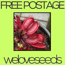 LOCAL AUSSIE STOCK - Dionaea Muscipula, Red Venus Flytrap, Plant Seeds ~10x