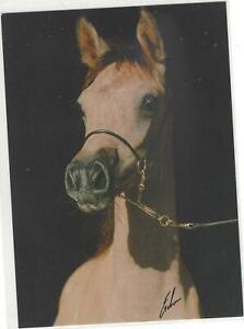 Horse Postcard - Erwin Escher Photo- Arabian Dalima Shah