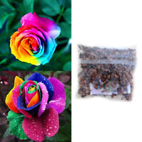 200Pcs Colorful Rainbow Rose Flower Seeds Home Garden Yard Plants Multi-Color