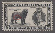 Newfoundland No. 238v Mint Never Hinged Very Fine male dog Variety
