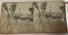 one of kind stereoviews Ostrichs horses and swans. Amature photographer. set of