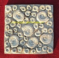 NEW LATEX MOULD MOULDS MOLD AMMONITE STEPPING STONE SQUARE FIBREGLASS CASE