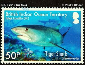 BIOT 2016 SC 453 a UNG BIOT SHARKS TIGER sharks VERY FINE
