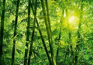 Wall mural photo wallpaper 366x254cm Green Bamboo forest   adhesive not included