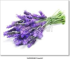 Lavender Art Print / Canvas Print. Poster, Wall Art, Home Decor - E
