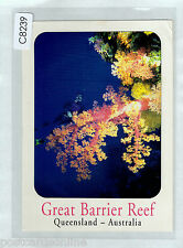 C8239cgt Australia Q Great Barrier Reef Coral & Diver postcard