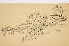 Jules PONCEAU 1881-1961 Dessin à l'encre Etude Branche de Pommier 1919