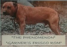 The Phenomenon Garners Frisco Rom American Pit Bull Book