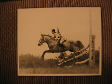 "Champion Connemara Pony ""An Tostal"" & Nancy Read up Original 1962 Horse Photo"