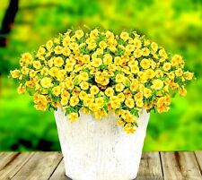 100 Pcs Lemon Slice Superbells Calibrachoa Petunia Annual Flower Seeds