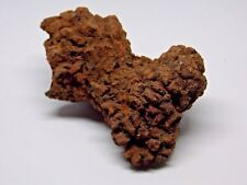 Coprolite Fossil Fossilized Poo Great Gift