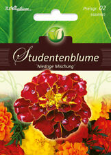 "Studentenblume ""niedr. Mischung"",Samen,Tagetes patula nana,Blume,Chrestensen,PG2"