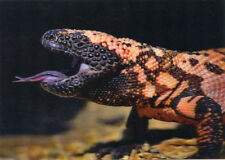 GILA Monster - Lizard -  3D Lenticular Postcard Greeting Card
