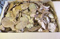 100 Gramm Bruchlaub Seemandelbaumblätter - Catappa-Leaves - Wasseraufbereitung