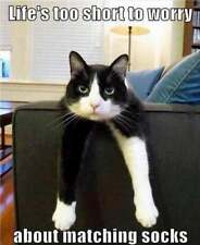 "Funny Cat  refrigerator magnet 3 1/2 x 3 1/2"""