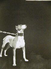 John Held 1930 CHAINED BULL TERRIER Art Print Matted