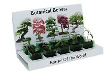 Bonsai Tree Grow Your Own kit Botanical bonsai tree 100% Recycled 5 Varieties
