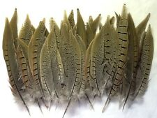 Natvie American Pheasant Tail Feathers for Crafts & Decorations