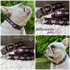 Allbreeds Dove Dog Collar and Lead Set Brown French Bulldog Puppy Pug XS Small