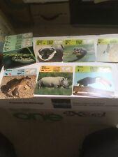 Rencontre Animal Safari Wildlife Fact Cards + Big Cats Birds Of Prey Postcards