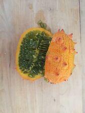 Kiwano Organic Jelly Melon Cucumber 10 Seeds - Cucumis - Vegetable