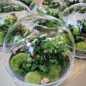 Glass clear Terrarium sphere Vase 20cm  with lid planter container centrepiece
