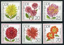 DDR 2435/40 ** Dahlien