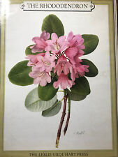 Leslie Urquhart The Rhododendron 2 volumes Charles Riefel Species Types Painting