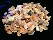 Seashell Craft Fragments Pendant Sized Ocean Polished One Pound 200-220 Pieces