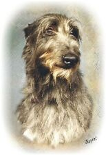 Deerhound A6 Blank Card Design No 2 By Starprint