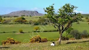 Sheepstor Dartmoor Devon Photo Canvas 12 x 22 inch panoramic (UK)