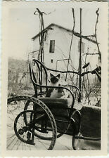 PHOTO ANCIENNE - VINTAGE SNAPSHOT - ANIMAL CHAT FAUTEUIL DRÔLE - CAT FUNNY