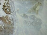 Vintage Art Robert Bateman High Kingdom Snow Leopard Winter Snow Rock Ledge
