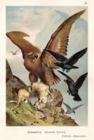 Majestic Golden Eagle with Hare 1888 illustration Art Print Poster 24x36 inch