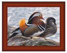 Beautiful Mandarin Duck Plaque