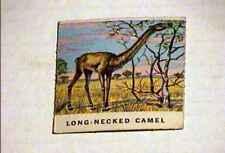 York Dinosaur Trading Card #42 Fine+ 1962 Rare Version Long Necked Camel
