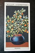 Dwarf Orange Tree    Vintage 1920's Illustrated Colour Card  VGC