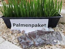 Palmenpaket 40St.frostharte Palmen Samen inkl Keimbeutel kein Porto  125N
