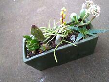 Mixed Succulents, cactus and Aloe vera $25