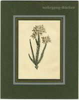 Decorative flowers, Original hand colored copper engraving from ca. 1830