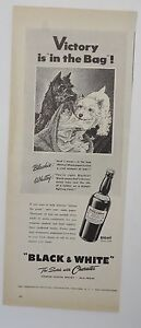 Original Print Ad 1955 BLACK & WHITE SCOTCH Victory is in the Bag Vintage