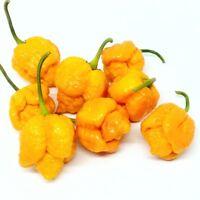 Trinidad Moruga Scorpion Golden Yellow Hot Chili Pepper Seeds 25 PCS ULTRA HOT!