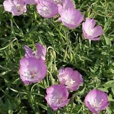 Godetia- Botea- Lilac- Grandiflora- 100 seeds- BOGO 50% off SALE