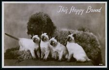 French Poodle dog and Siamese cat kittens original old 1930s photo postcard